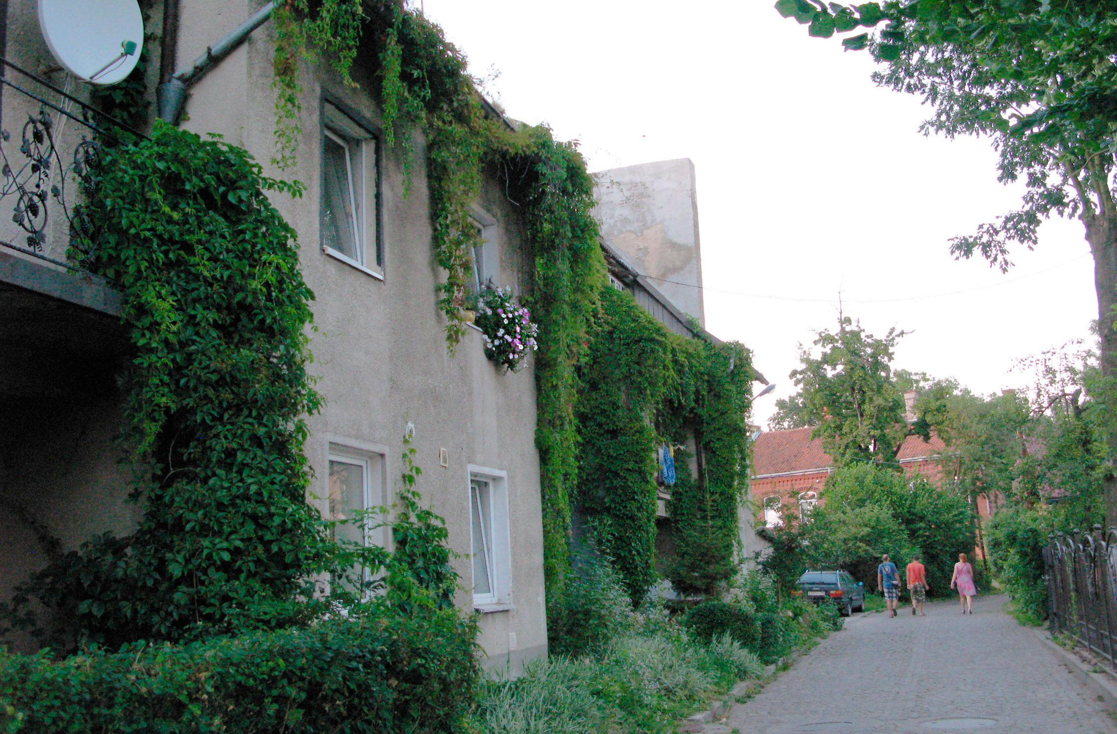 дом с плющом на улице Октябрьская