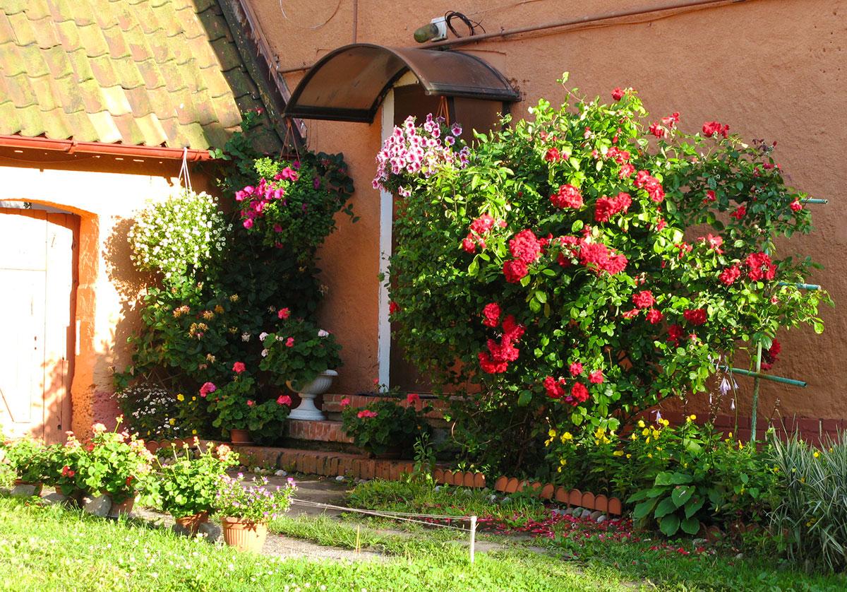dom-rozy-pionerskiy