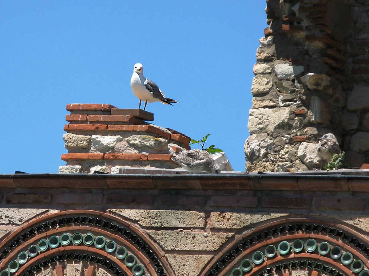 glarus-na-cerkvi-svyatoy-paraskevy-nesebr
