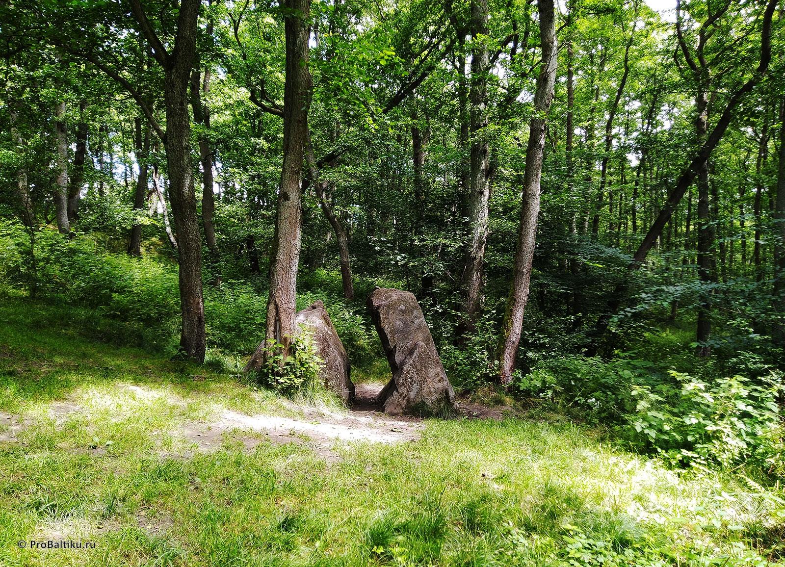 Borstenstein-kamen-lji-pionerskiy-v-lesu