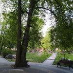 Рыба или человек: почему сквер в Пионерском называют парком Карася?